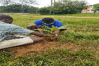 Both teachers and students were involved in the tree planting exercise