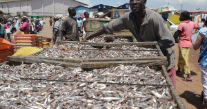 Marine fish stock at the verge of collapse according to Professor Wisdom Akpalu