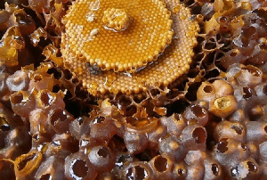 Honey production in Ghana is lucrative
