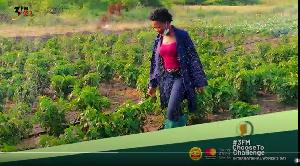 Portia Agyei Yeboah is a farmer