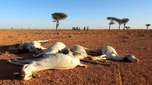 Kenya's drought response plan requires Ksh9.4 billion for July-November period
