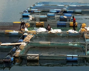 The fishing industry like other industries has been impacted by the coronavirus pandemic