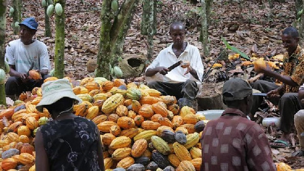 Government support can lessen our burden – Cocoa farmer