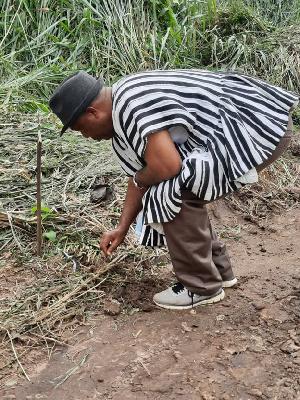 Nana Antwi Agyei Brempong II planting tree