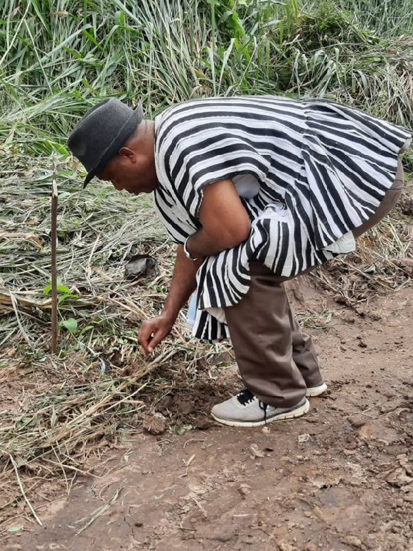 Gov't urged to sustain the afforestation programme