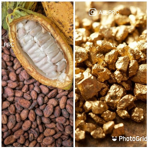 Cocoa beans and gold in a photo collage