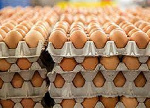 Poultry farmers in A/R to petition Akufo-Addo over plans to replace eggs with 'Chinese' mackerel in schools