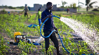 Agricultural Scientists has urged government to take special interest in agricultural sector