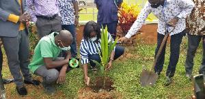 MCE Coconut Tree Planting .jpeg