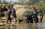 Elephants roam in Kimana Sanctuary