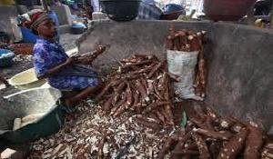 Cassava Processor