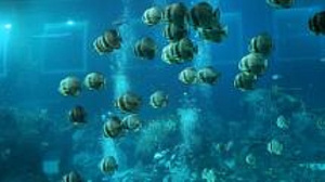 Tropical marine life threatened by climate change