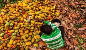 Child labour. File photo