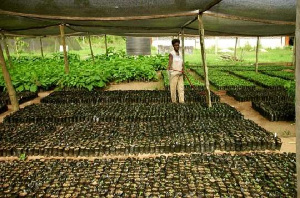 Farmers Seeds