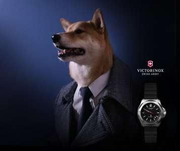 Dog Fashion Blogger