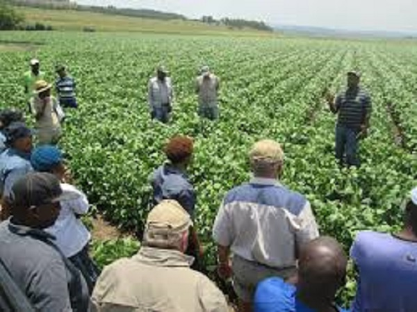 Coronavirus response must target African agriculture and the rural poor