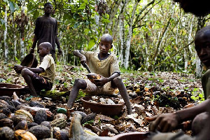 Children doing hazardous work has gone up in the world's top coca producers