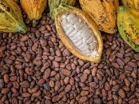 Cocoa beans ( file photo)