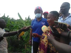 Cynthia Mamle Morrison cut sod for construction bridges over River Akora