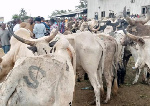 Butchers, cattle dealers lament low sales due to cedi depreciation