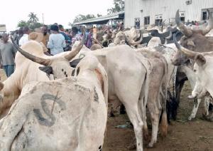 Catte Kumasi.png