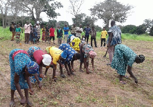 Farmers on the demonstration field
