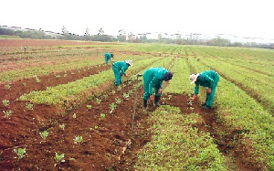 Planting For Food Jobs