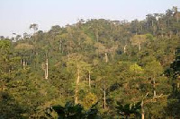 Anderson said Ghana has only 18% of forest left and should not be destroyed for bauxite mining