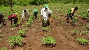 Farmers Ghana 78