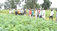 The farmers being conducted by Senior Research Scientist of CSIR-SARI in charge of the Manga station