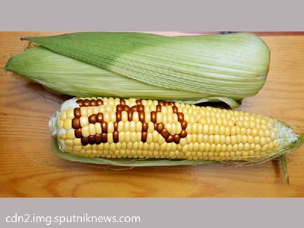 GMO Controversy! National well-being wins over foreign interests as govt ditches GMOs