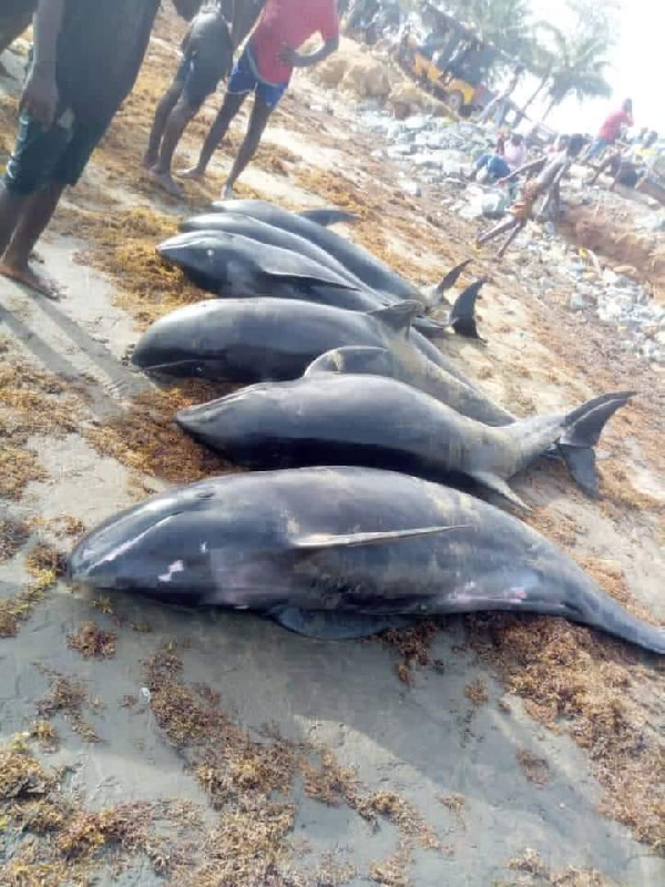 At least 80 dolphins were washed up dead along parts of the coast on Sunday April 4, 2021