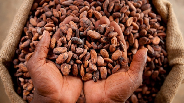 Parliament approves $1.3 bn cocoa loan for 2020/2021 crop season