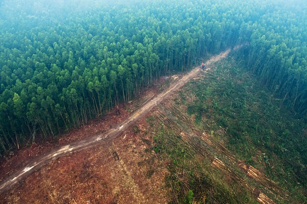 Forest the size of 8,300 football fields destroyed in Ghana annually - NDF report