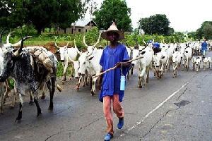 Fulani Herdmen Blue
