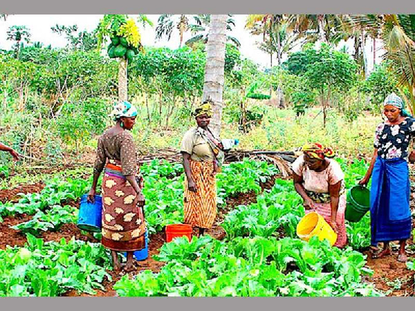 Census report backs support for women farmers