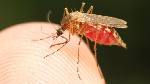 Malaria is one single disease that claims a lot of lives