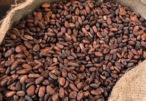 File photo: Cocoa beans