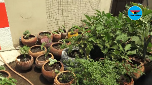 One can make a lot of money from backyard gardening