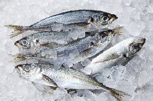 Fish Coldstore