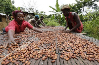 Government to modify the incentives to cocoa manufacturers to increase processing of cocoa in Ghana