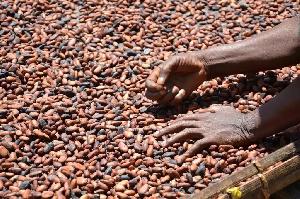 Ghana's Cocoa industry holds massive opportunities for entrepreneurs