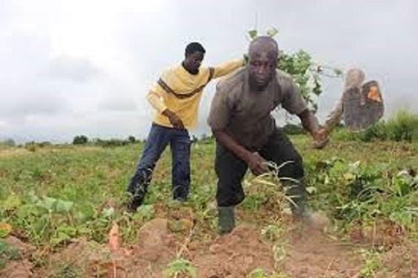 File photo of a smallholder farmer on his farm