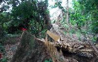 Dodowa Forest