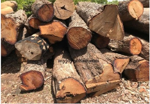 Rosewood is found in open forest and wooded savannah