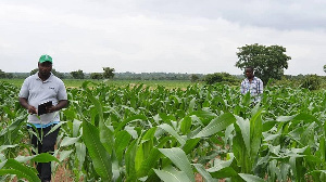 A farm supported by the 2019 Agribooster Program