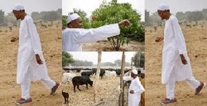 Buhari on his crop and cattle farm in Daura, Katsina State