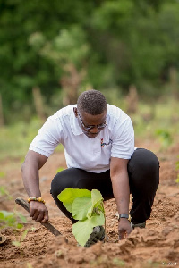 Tree planting must be a vital part of human existence