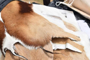 Animal skins are used to make clothes, shoes and handbags