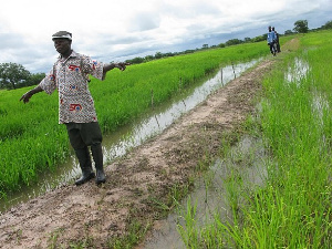 The wild rice infestation has taken over 300 hectares